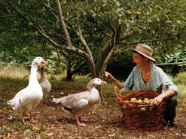 A WWOOF volunteer with geese © WWOOF