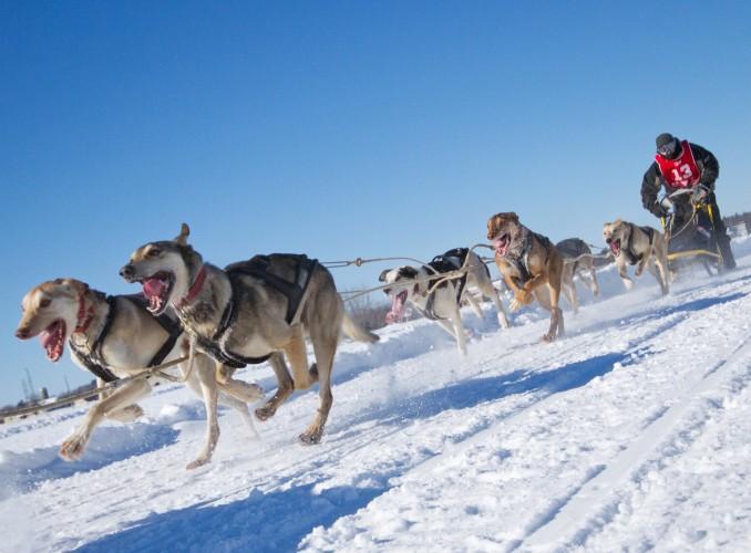 International Lanaudiere Dog Sledding Race, Quebec, Canada © Mircea Costina | Dreamstime