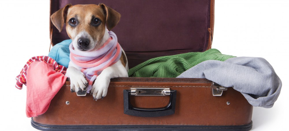 Travel Pet Dog © Flydragonfly | Dreamstime