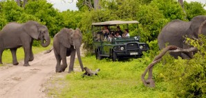 Elephant Safari, Botswanna © Inna Felker | Dreamstime