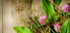 Herbal Flower Plants Nature © Subbotina   Dreamstime 24830774