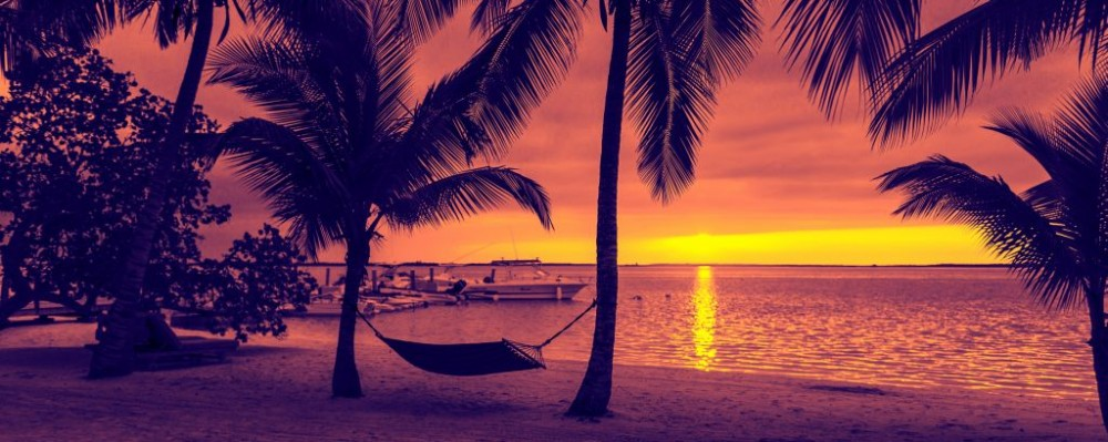 Hammock On The Sunset Beach Palm Trees Vacation Summer C Syda Productions