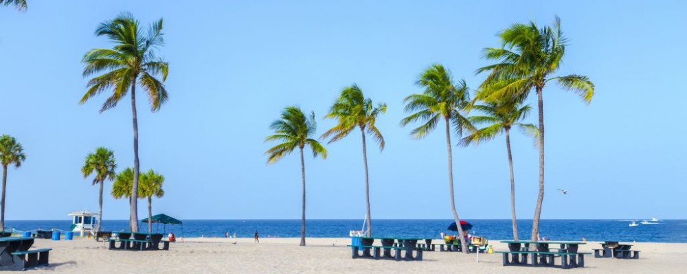 Tropical Palm Trees And Picnic Tables On A Beach In Fort Lauderdale Florida C Jorg
