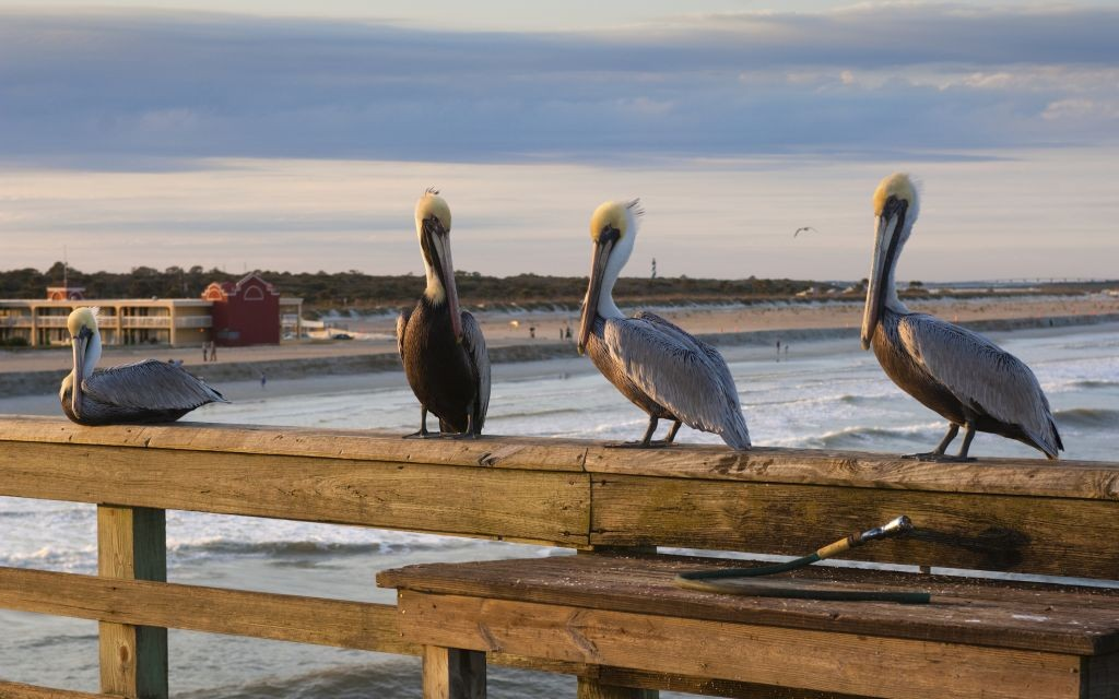 Trazee Travel Top 5 Beaches In Northern Florida