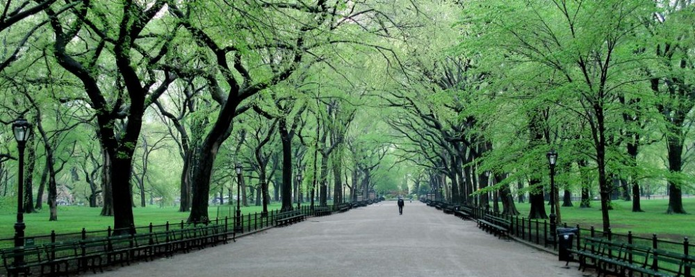 Park Central New York Reviews & Prices | U.S. News