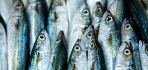 Fish Market © Evan Spiler | Dreamstime 40422344