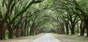 Mossy Oak Trees in Forsyth Park, Savannah, Georgia © Irina88w | Dreamstime