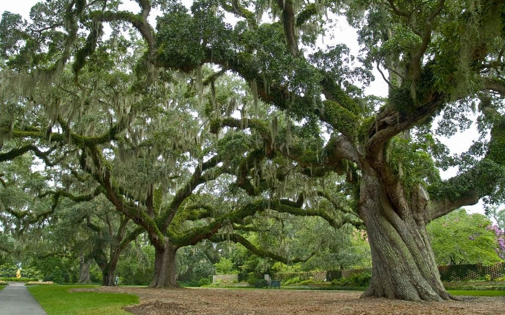 Brookgreen Gardens, Myrtle Beach, South Carolina © Andrew Kazmierski | Dreamstime 6455328