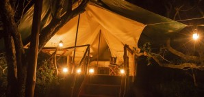 Camping Tent © Fiona Ayerst   Dreamstime 26143170