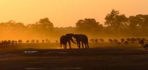 Elephants and Buffalo on Kennedy Vlei, Hwange National Park, Zimbabwe © Jason Wharam | Flickr 29573095