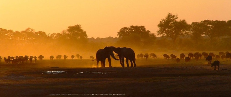 Elephants and Buffalo on Kennedy Vlei, Hwange National Park, Zimbabwe © Jason Wharam | Flickr 29573095
