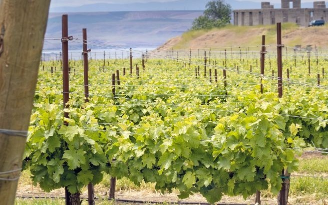 Maryhill Winery, Columbia Gorge © Jpldesigns | Dreamstime 26581266