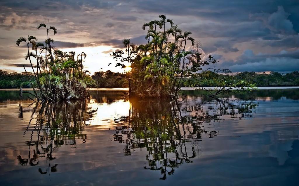 Amazon Rainforest, Ecuador © Pablo Hidalgo   Dreamstime 59533135