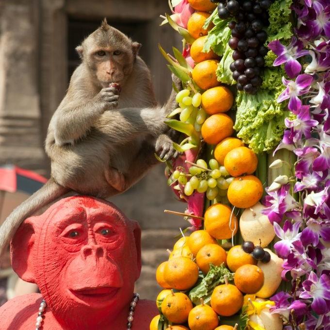 Lopburi Monkey Banquet, Phra Prang Sam Yot, Thailand © Manit Larpluechai | Dreamstime 48281935