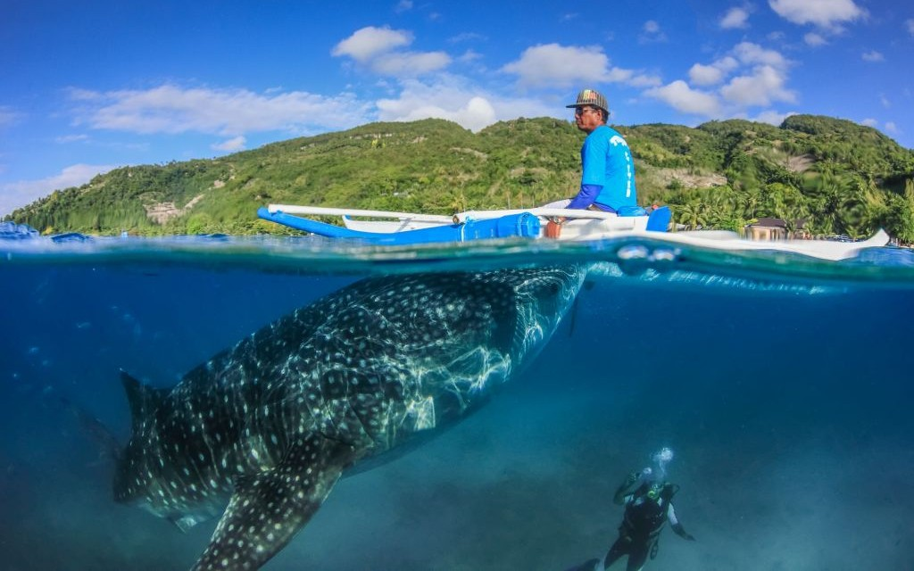 A Whale Shark off Oslob, Philippines © Whitcomberd | Dreamstime 42297269
