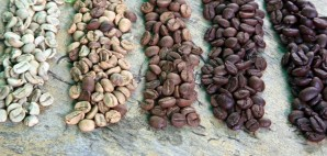 Coffee Beans © Daniel Kaesler   Dreamstime 15788267