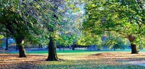 Central Park, New York City © Jayk67 | Dreamstime 36044404