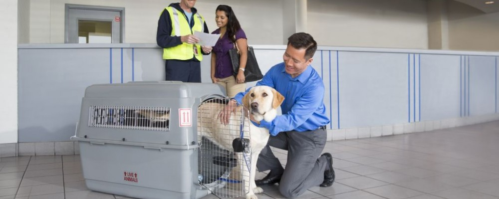 Trazee Travel United Petsafe Travel For Your Furry Best