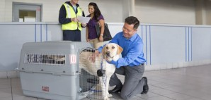 ORD Dog delivery Hi Res © United | PetSafe