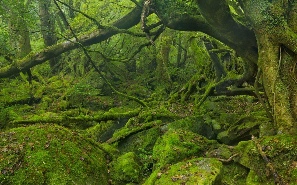 Yakushima Forest, Japan © Sara Winter   Dreamstime 58509106