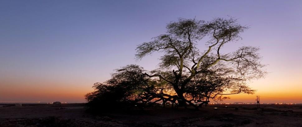 Tree of Life, Manama, Bahrain © Dr Ajay Kumar Singh | Dreamstime 64629789