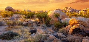 Joshua Tree National Park, California © Kateleigh   Dreamstime 2521714
