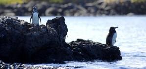 Isabela, Galapagos Islands © Kjersti Joergensen | Dreamstime 22136632