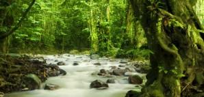 Rainforest © Szefei | Dreamstime 15750337