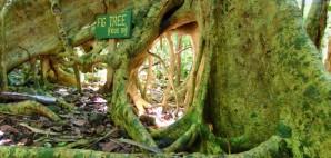 Sage Mountain National Park, British Virgin Islands © Jason P Ross | Dreamstime 25958081