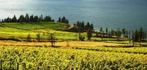Vineyards of the Okanagan Valley, Washington © Tania Thomas | Dreamstime 29265610