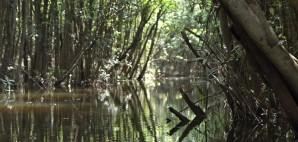 Rainforest © Asdf_1 | Dreamstime 2792516