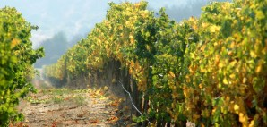Winery in Chile © Ene | Dreamstime 1470496