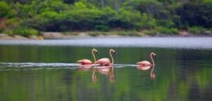 Flamingos of Bonaire © Kjersti Joergensen | Dreamstime 18038083