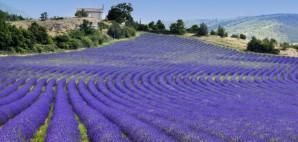 Provence, France © Tramontana | Dreamstime 29967887