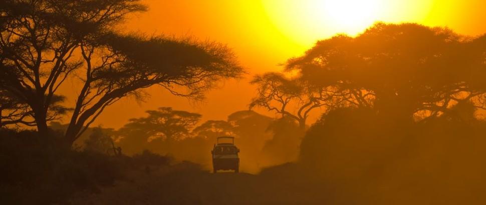 Safari © Javarman | Dreamstime 6688184