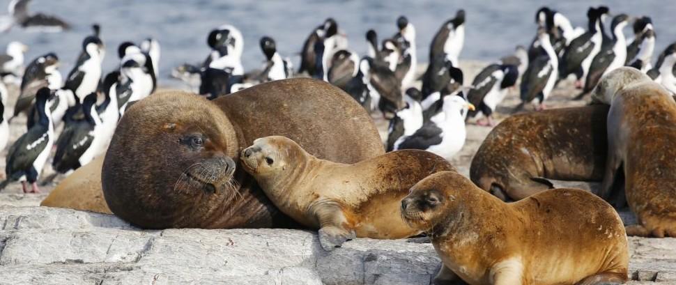 Seals and Penguins of Antarctica © Zhukovsky | Dreamstime 53326237