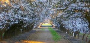 Fresno, California © Rfmartin | Dreamstime 14473669