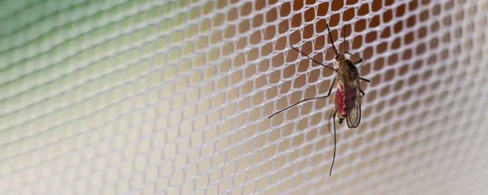 Mosquito © Birute Vijeikiene | Dreamstime 14353709