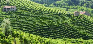 Prosecco Fields of Italy © Blue2008 | Dreamstime 25797819