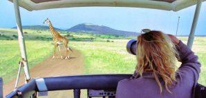 Safari in Africa © Karin Van Ijzendoorn | Dreamstime 2489469
