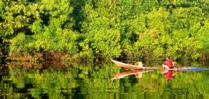 Amazon Jungle © Paura   Dreamstime 11930184