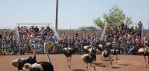 Arizona Ostrich Festival © Mark Christian | Dreamstime 69276700