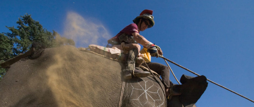 Elephant Polo in Nepal © Patrice Correia | Dreamstime 52071815