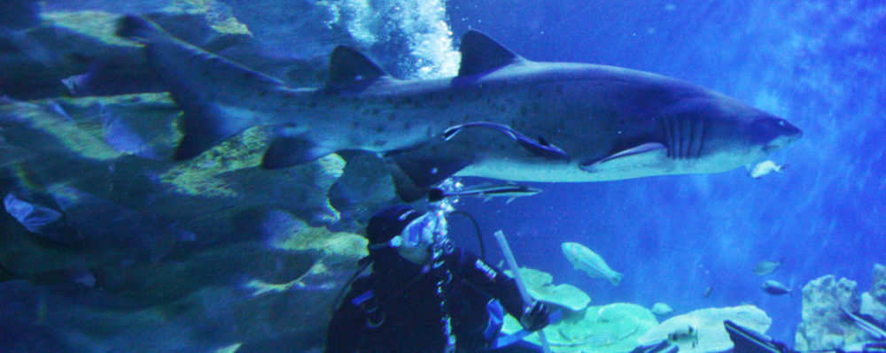Sand Tiger Shark, Fiji © Kaikai | Dreamstime 1616721