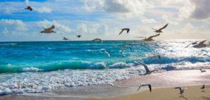Singer Island, Palm Beach, Florida © Lunamarina | Dreamstime 73514143