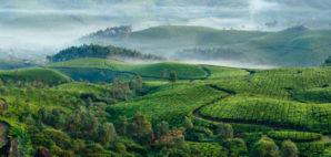 Tea Plantation in Munnar, India © Dmytro Gilitukha | Dreamstime 64898552