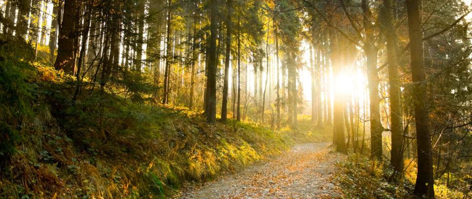 Forest © Kellydt | Dreamstime 22012345