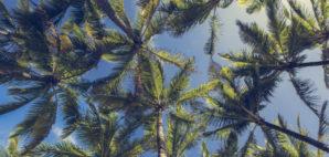 Kapaa, Hawai'i © Mariusz Prusaczyk | Dreamstime 51447048