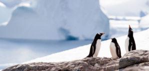 Penguins of Antarctica © Photodynamic | Dreamstime 9849535