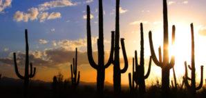 Saguaro National Park, Arizona © Snehitdesign | Dreamstime 25442298